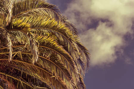 woody bay: Tropical Background. Palm leaves  on blue sky background