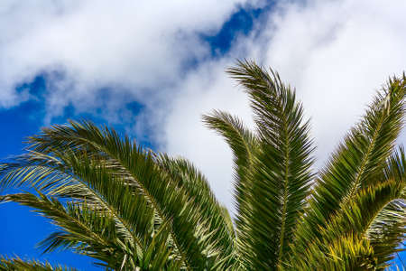 woody bay: Tropical Background. Palm leaves  on blue sky background Stock Photo