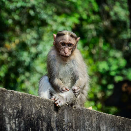 periyar: Funny monkey taken in Periyar Wildlife sanctuary, Kerala, India Stock Photo