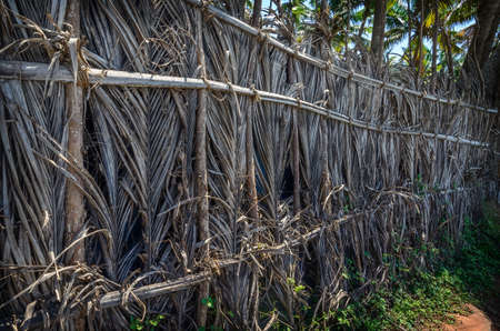 indian village: A fence made of dried leaves of the coconut palm in tropical Indian village near the  blue ocean in Varkala, Kerala, India