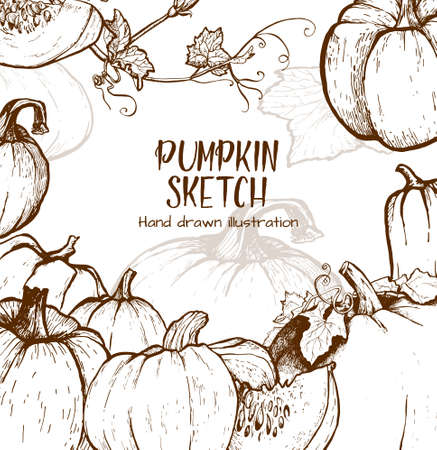 autumn background: Pumpkin sketch hand drawn illustration. Vegetable engraved style illustration. Detailed vegetarian food sketch. Farm market product.