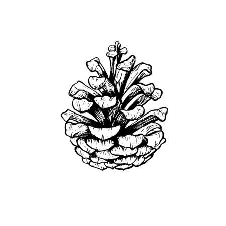 Hand drawn vector illustration of acorn