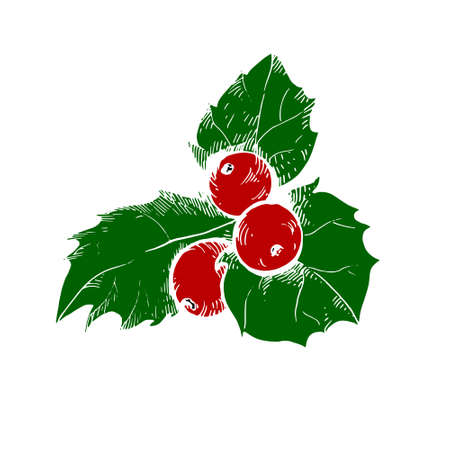 Vector sketch of Christmas holly berry. Christmas symbol.