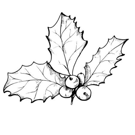 Vector linear drawing of Christmas holly berry isolated Vettoriali