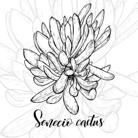 Hand drawn senecio icon.  イラスト・ベクター素材