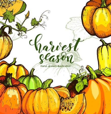 Colorful pumpkin sketch hand drawn illustration. Vegetable engraved style illustration. Detailed vegetarian food sketch. Farm market product.