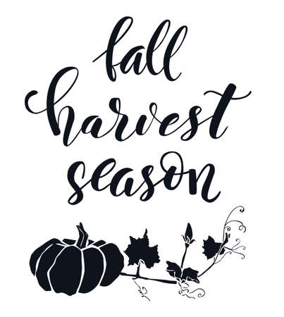 Hand drawn lettering Harvest season. Hand written elegant phrase isoleted on white for your design. Handwritten Illustration. Can be printed on greeting cards, paper and textile designs, etc Ilustrace