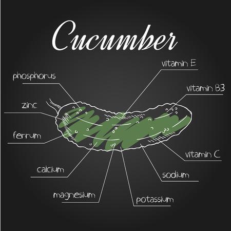 nutrientes: ilustración vectorial de la lista de nutrientes para el pepino.