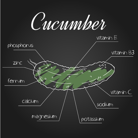 nutrient: vector illustration of nutrient list for cucumber. Illustration