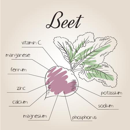 nutrientes: ilustración vectorial de la lista de nutrientes de la remolacha.