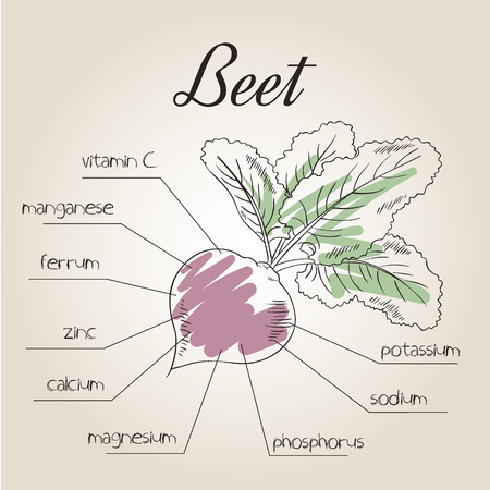 vector illustration of nutrient list for beet. Illustration