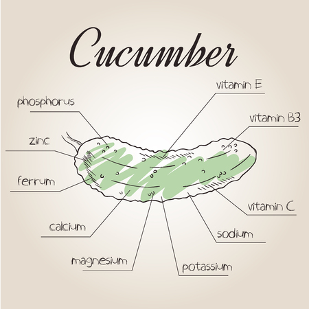 vector illustration of nutrient list for cucumber. Illustration