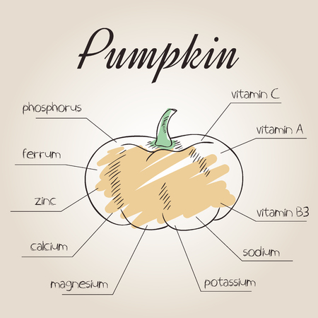 nutrient: vector illustration of nutrient list for pumpkin.