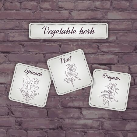 spinach: vector illustration of flashcard with  vegetable herb: mint, oregano, spinach on a brick backdrop.