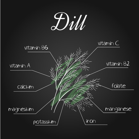 nutrients: vector illustration of nutrients list for dill on chalkboard backdrop. Illustration