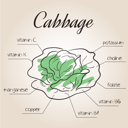 vector illustration of nutrients list for cabbage. Stok Fotoğraf - 55721144