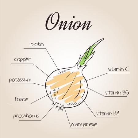 nutrientes: ilustración vectorial de la lista de nutrientes de la cebolla.