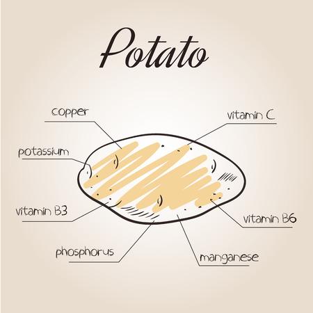 nutrientes: ilustración vectorial de la lista de nutrientes de la papa.