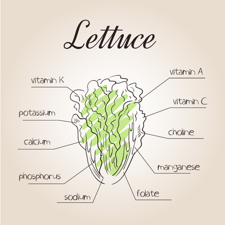 vector illustration of nutrients list for lettuce.
