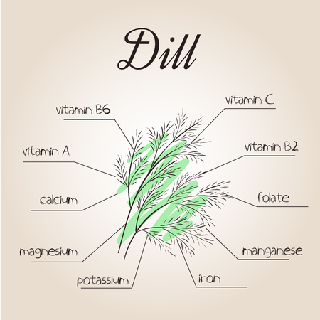 nutrients: vector illustration of nutrients list for dill. Illustration