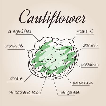 nutrientes: ilustración vectorial de la lista de nutrientes de la coliflor.