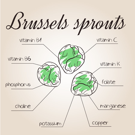 nutrients: vector illustration of nutrients list for brussels sprouts.