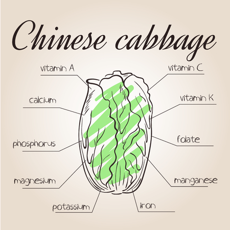 nutrients: vector illustration of nutrients list for chinese cabbage. Illustration