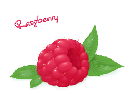 vector illustration of realistic isolated ripe raspberry with leaves.