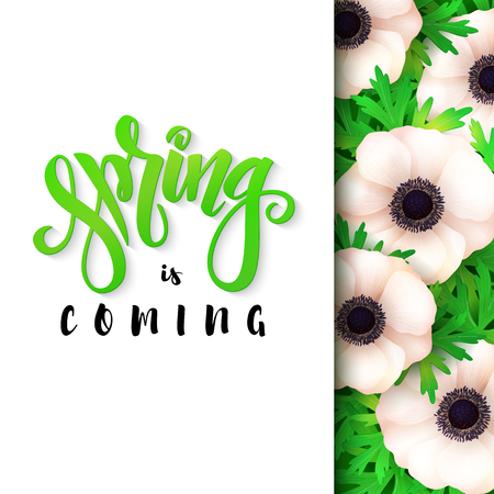 Vector illustration of hand lettering poster - spring is coming with paper sheet on a background of blooming anemone flower.