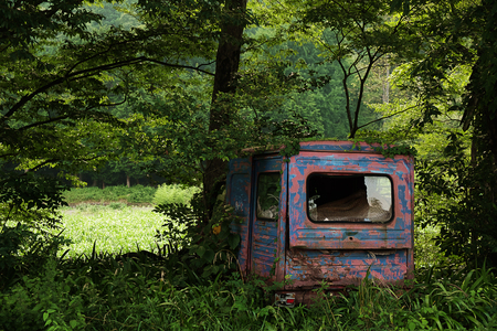 scrapped: Scrapped vehicles and trees