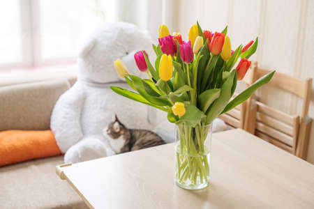Beautiful large multi-colored tulips yellow orange and red in a glass vase on a table against the background of a window and a sofa with a teddy bear and a cat