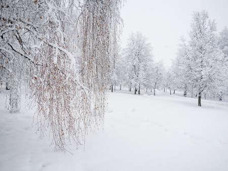 Heavy snowfall in the park, snow-white landscape Standard-Bild