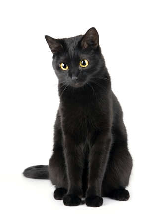 black cat: Cute black cat isolated on white