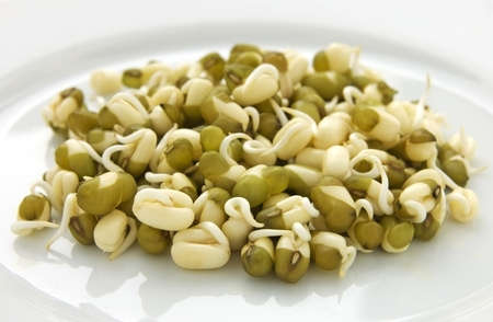 sprouted: Sprouted mung beans on white plate close up