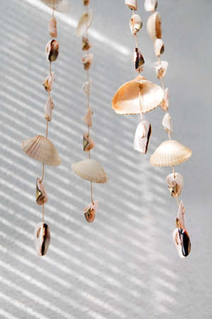 wind chime: Handmade wind chimes  mobile  of seashells in sunlight