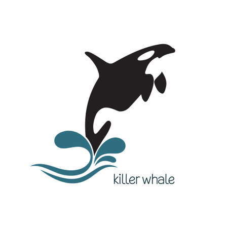 killer waves: Killer whale jumping out of water