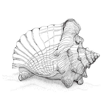 conch shell: Decorative pen and ink style drawing of big conch shell on sand Illustration