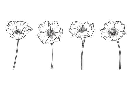 Set of hand drawn wildflowers. Flower heads, stems and hatching saved as separate forms in vector Ilustrace