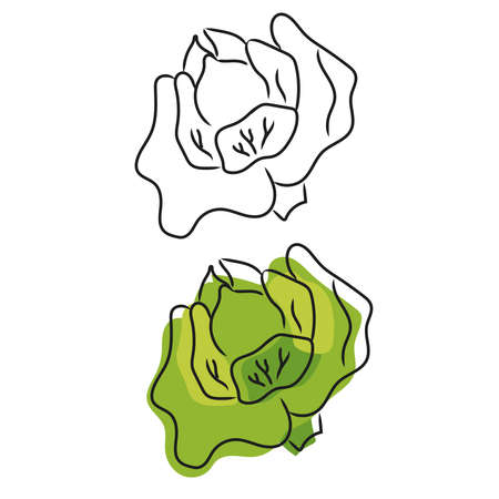 Doodle vector illustration of cabbage. Sketch of fresh vegetable isolated on white background Illusztráció