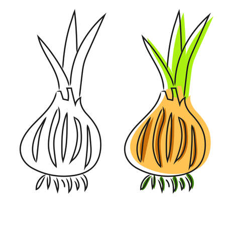 Doodle onion iillustration in vector. Colorful oninon icon in vector.