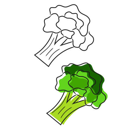 Doodle broccoli isolated on white background. Hand drawn illustration.