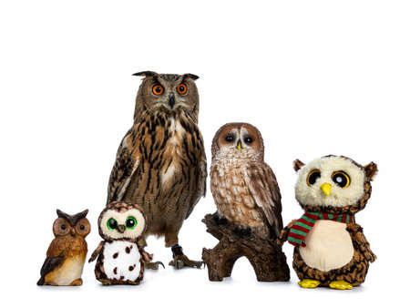 Row  collection of owls; stuffed animals, ceramic and Turkmenian Eagle owl  bubo bubo turcomanus sitting isolated on white background looking straight in lens Stockfoto