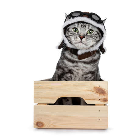 Handsome black tabby British Shorthair cat with green eyes wearing a hat and glasses looking at lens isolated on white background sitting in wooden box