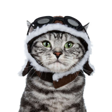 Head shot of handsome black tabby British Shorthair cat with green eyes wearing hat and glasses looking at lens isolated on white background