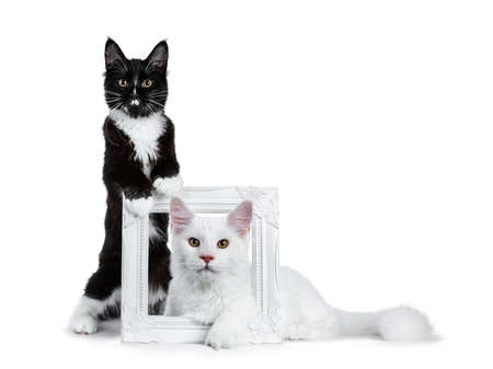 Duo or black with white and solid white stock photography Duo or black with white and solid white Stockfoto