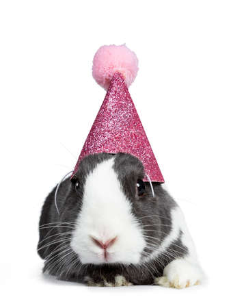 Cute gray with white European rabbit, wearing a pink glitter hat with pompom. Looking at camera facing side. Isolated on white background.
