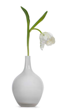 Single white tulip in glass vase, isolated on white background.