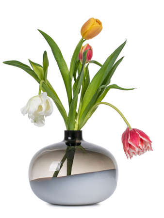 Bouquet of diffent types and color tulips in glass vase. isolated on white background.