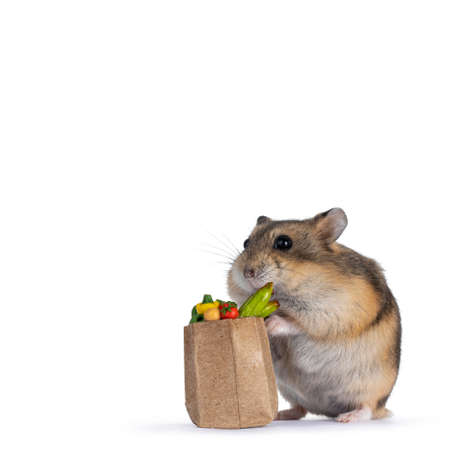 Cute dwarf hamster with tiny bag filed with vegetables in dollhouse size.Looking towards camera. Isolated on white background. Stockfoto