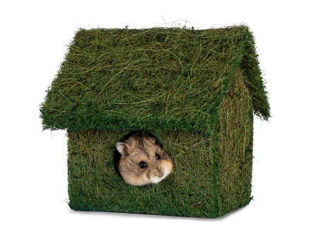 Little house mad of grass. Hamster peeping out of it. Isolated on a white background.